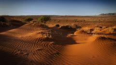 beyond the dunes
