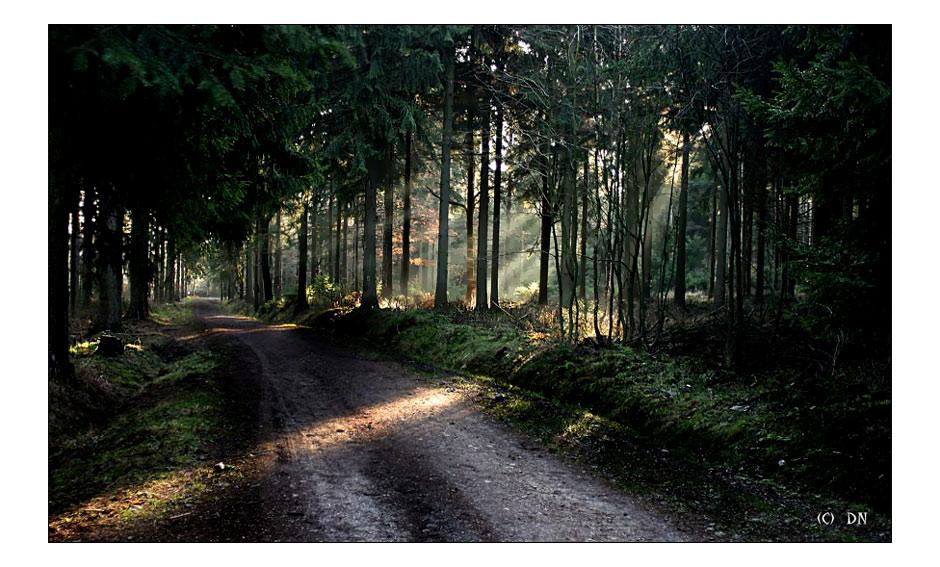 bezaubernde Waldwege...