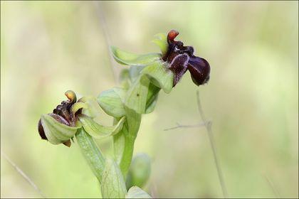 Macro Orchidées