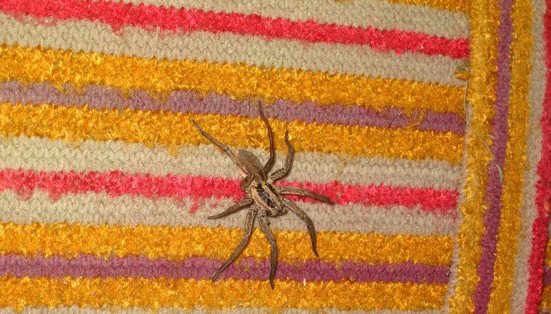 BG Spider I