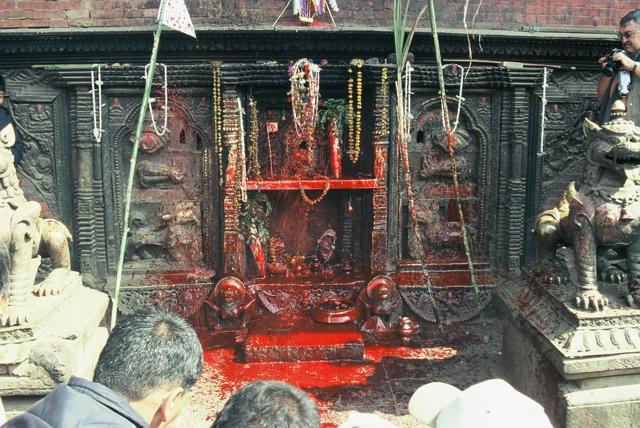 Bhaktapur Tieropfer 08