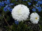 Bianco e Blu