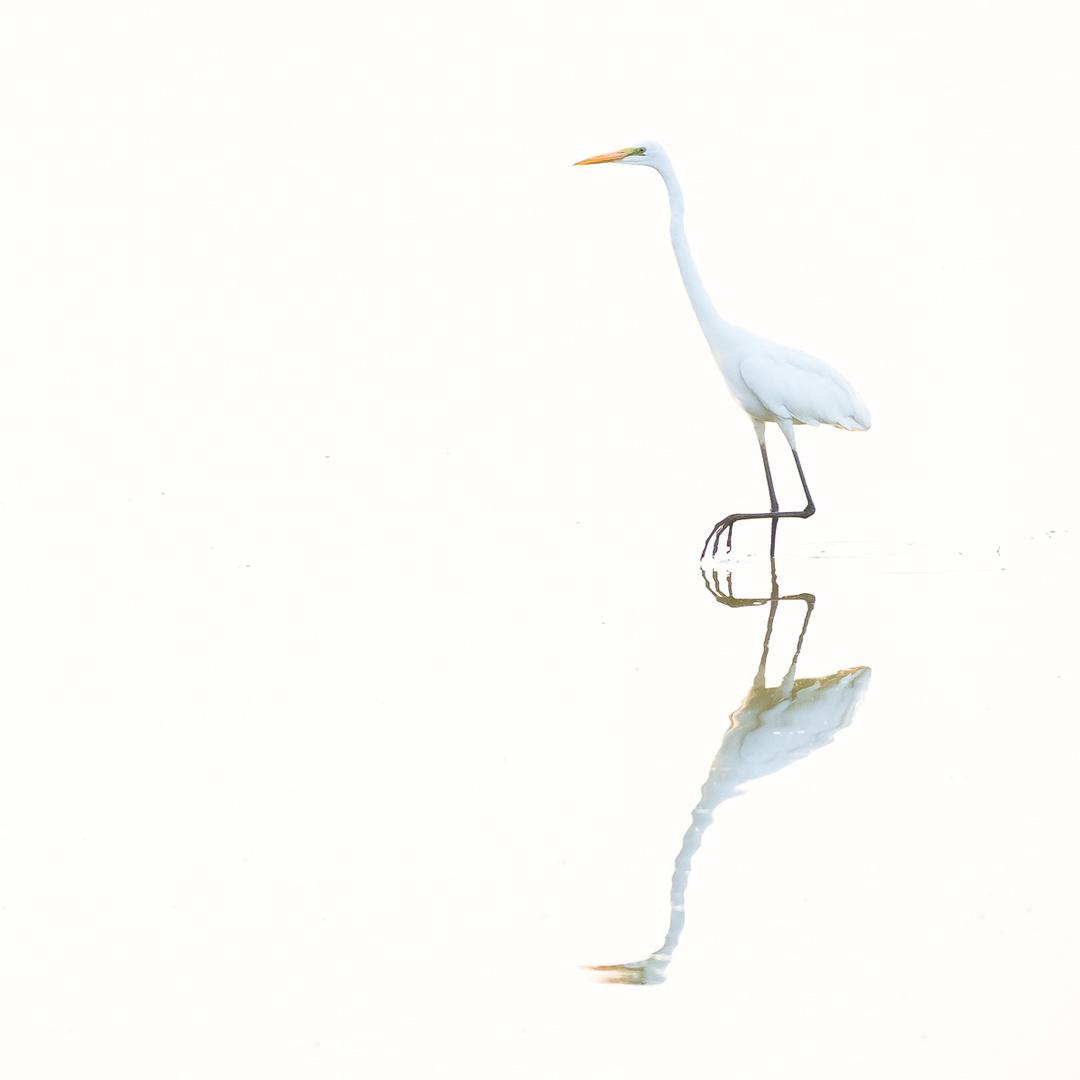 bianco su bianco