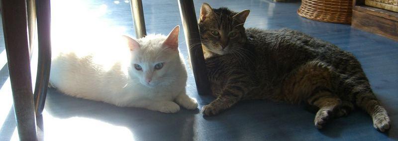 Bibi & Lea