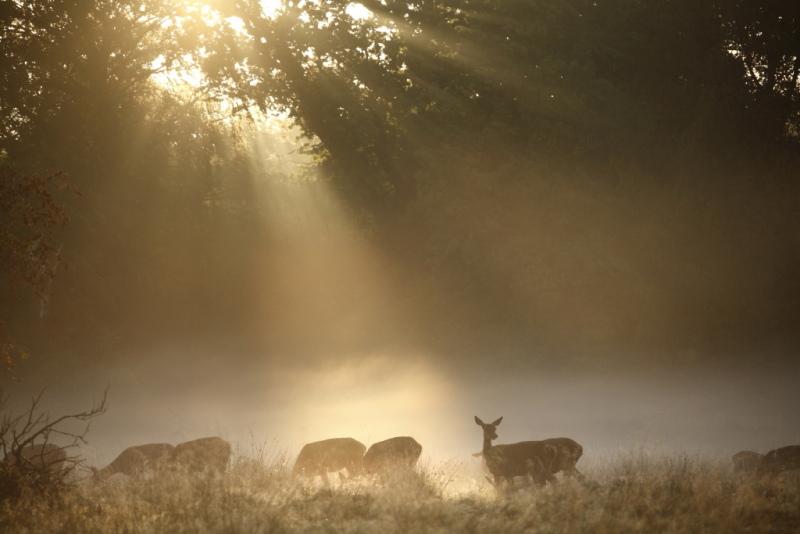 Biches au lever du soleil