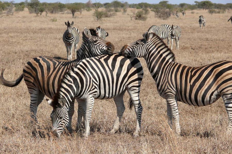 Bickkontakt auf Zebrastreifen