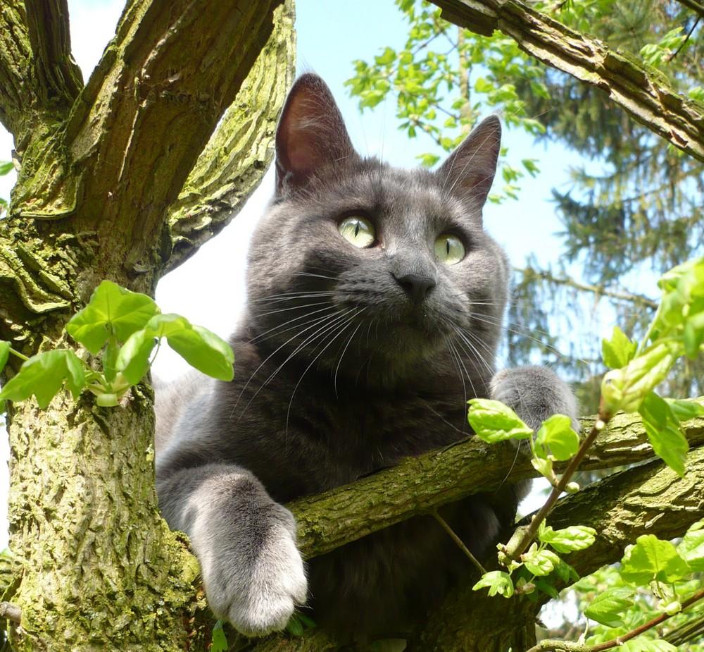 Bien dans son arbre