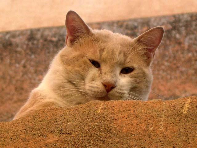 Bien-être dans la medina de Marrakech