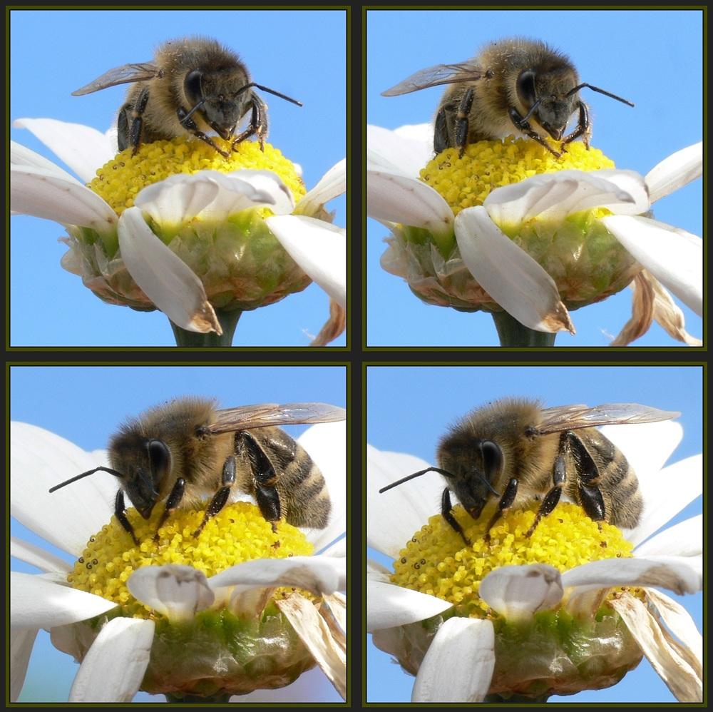 Bienchen auf Blümchen