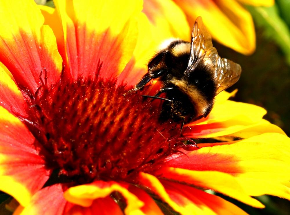 Bienchen auf Bluemchen 4