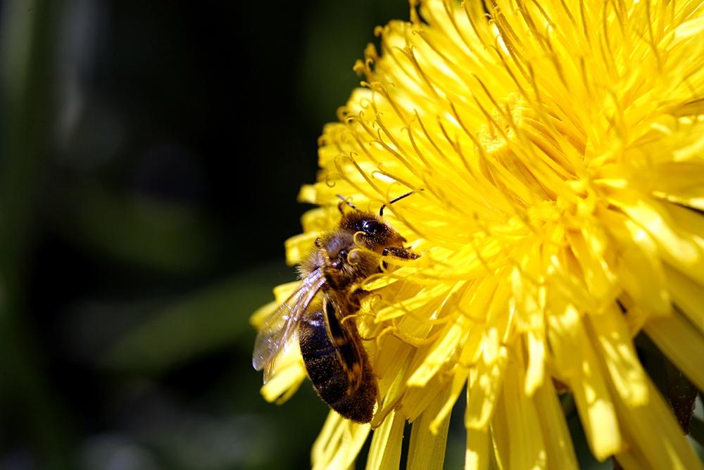 Bienchen auf Bluemchen 5