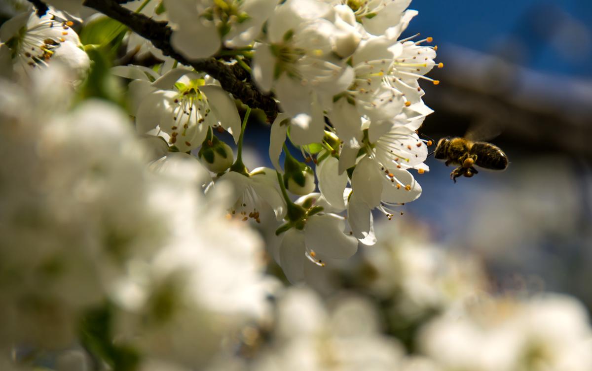 Bienchen.. ganz fleißig...