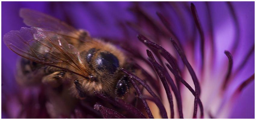 Bienchen - im Blümchen