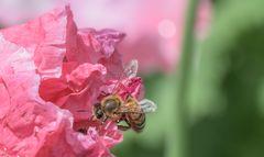 Bienchen trifft Käferchen