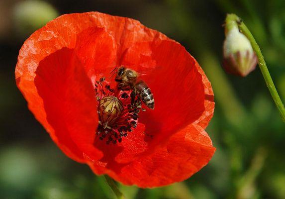 Bienchen und Blümchen 2