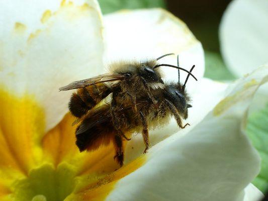 Bienchen und Blümchen ....