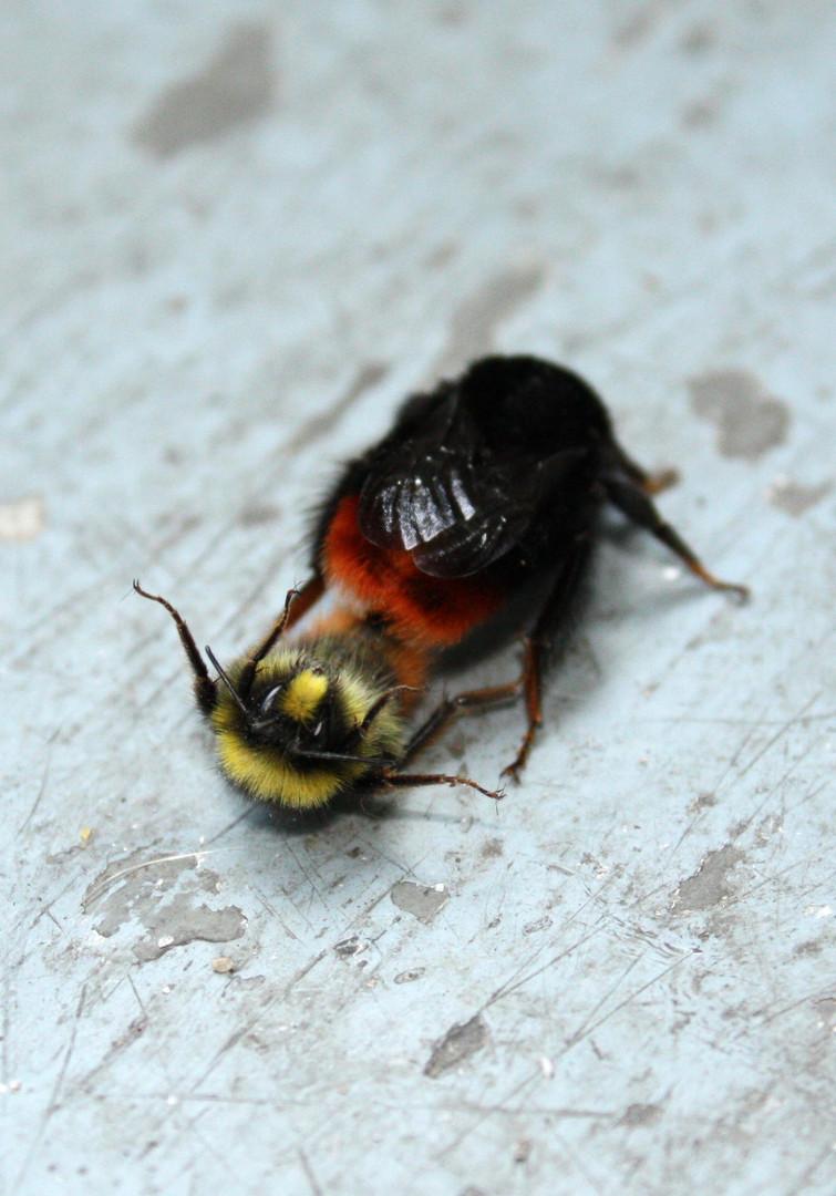 Bienchen und Blümchen?