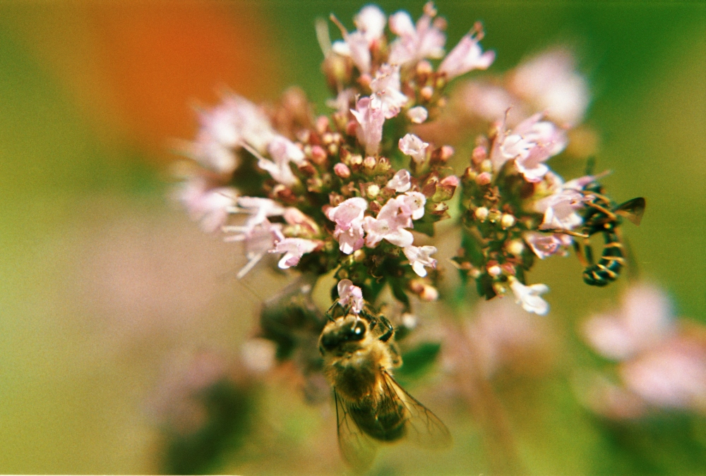 Bienchen und Blümchen Nr. 3