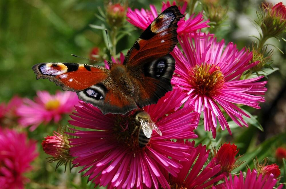 Bienchen und Schmetterling