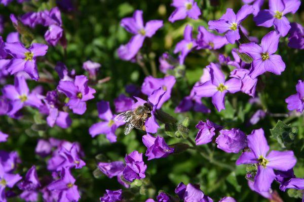 Biene allein