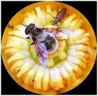 Biene auf Seerose