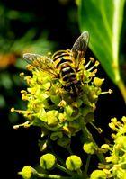 Biene hinterm Haus
