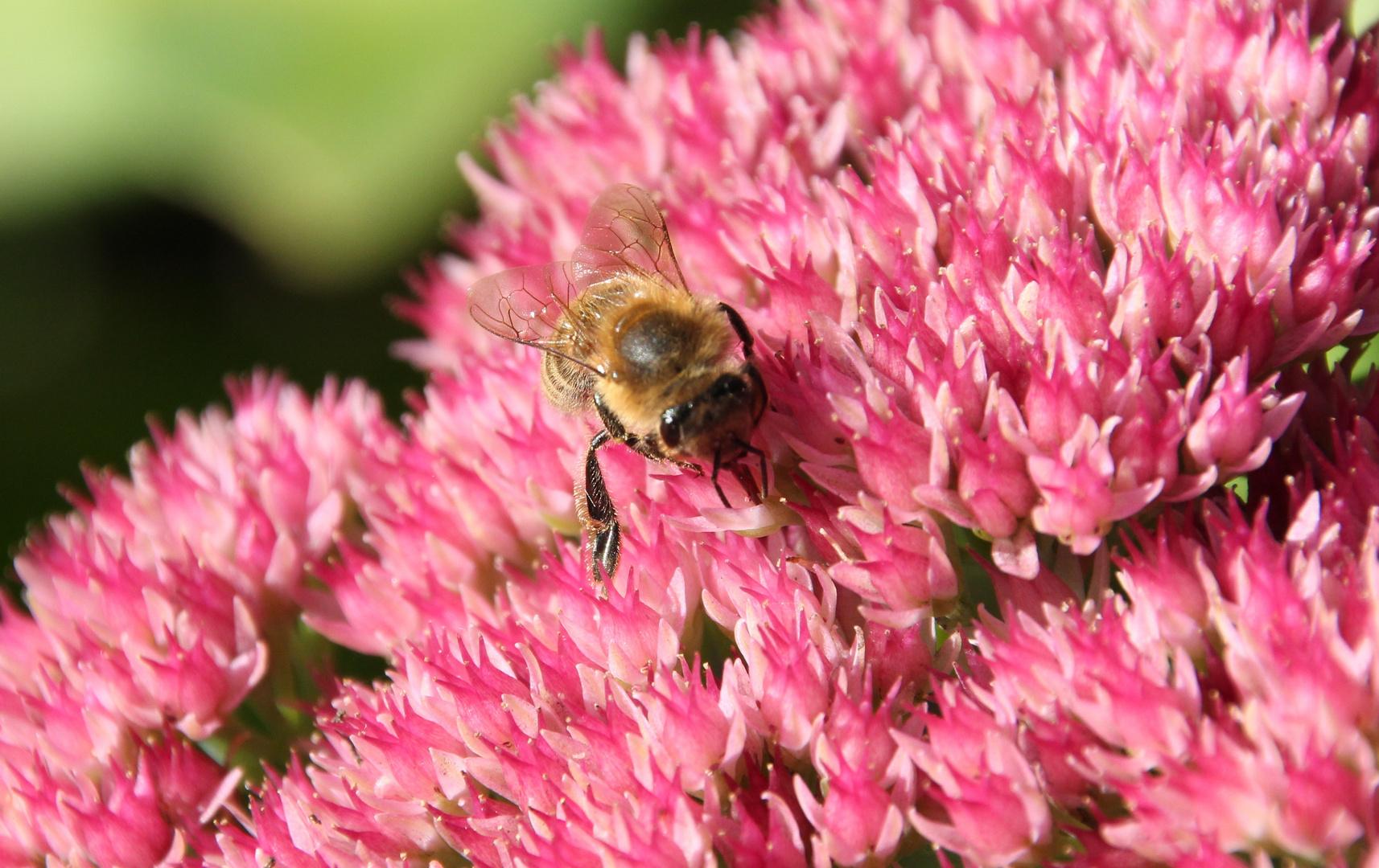 Biene im Park