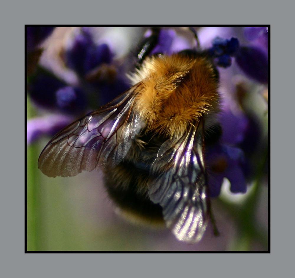 Biene im Wintermantel