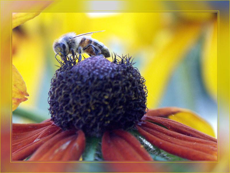 Biene in Herbstfarben