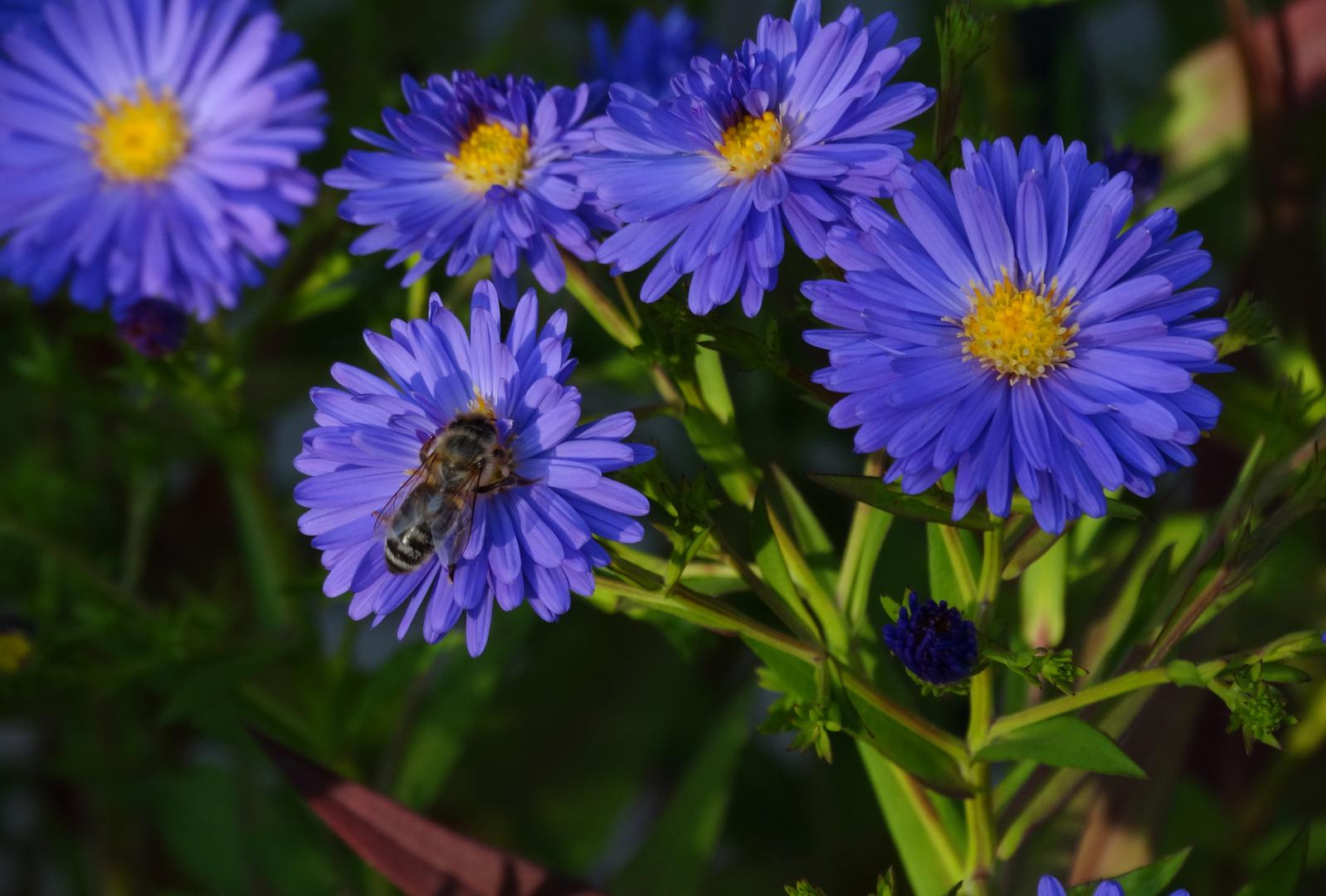 Biene mit Blume