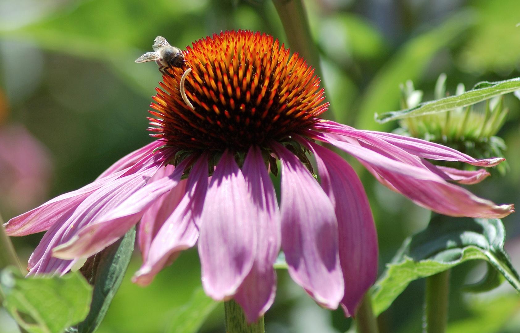 Biene mit Wurm im Mund