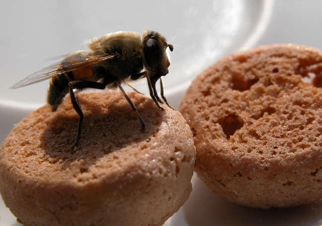 Biene oder Fliege