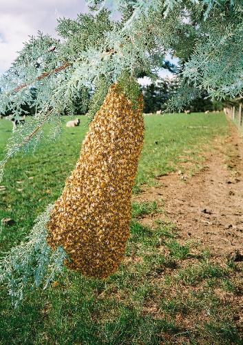 Bienen-Ausflug