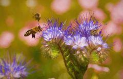 Bienen im Anflug als Gemälde