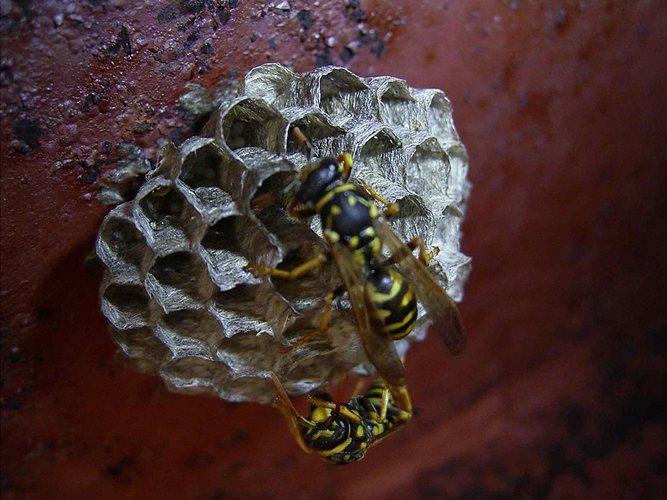 Bienen im toten Schiff