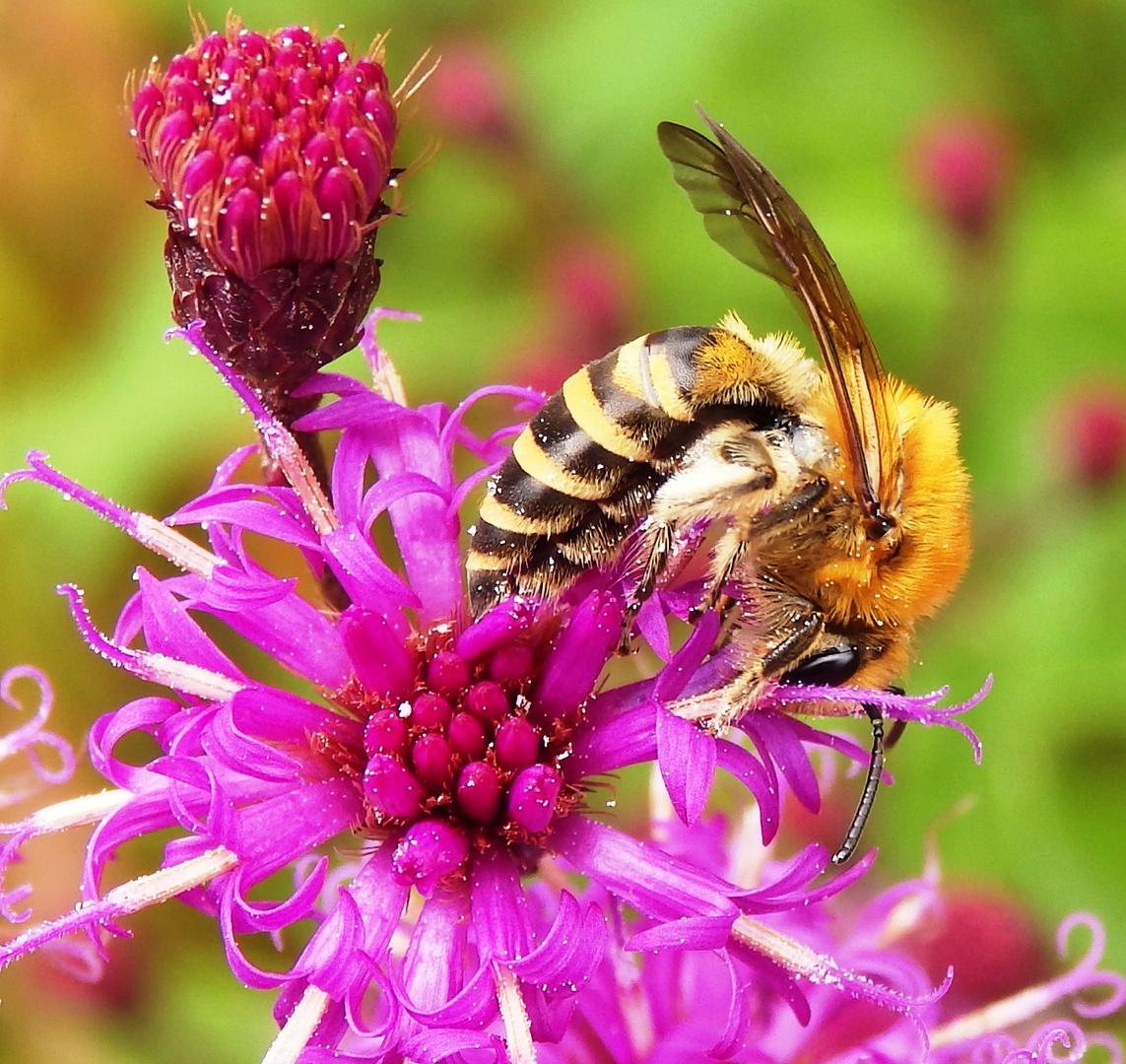 Bienen-Posing im September