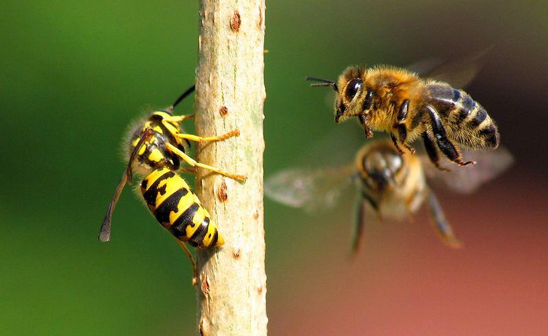 Bienen sind