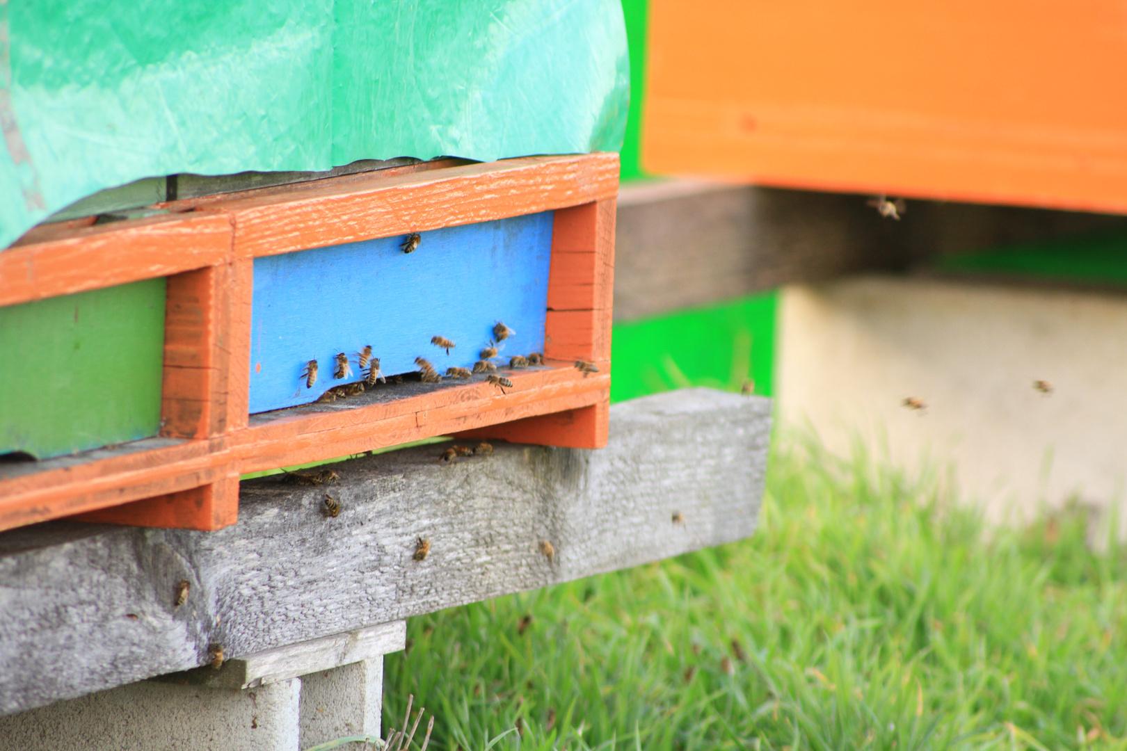 Bienenausflug