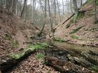 Bienenbach Nahaufnahme 01
