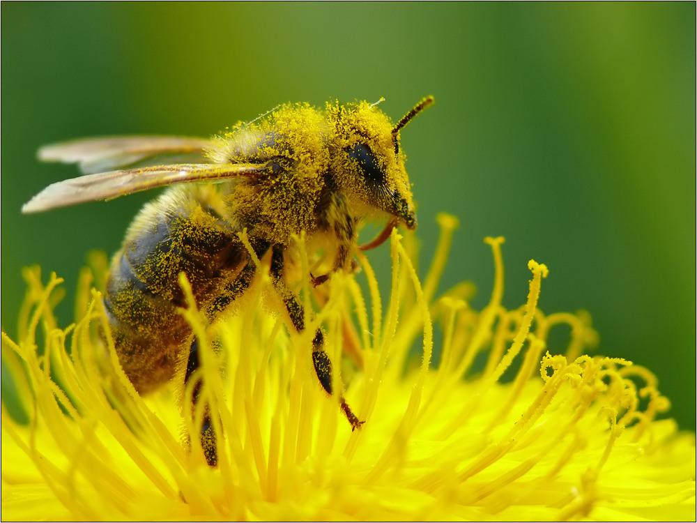 Bienenbad