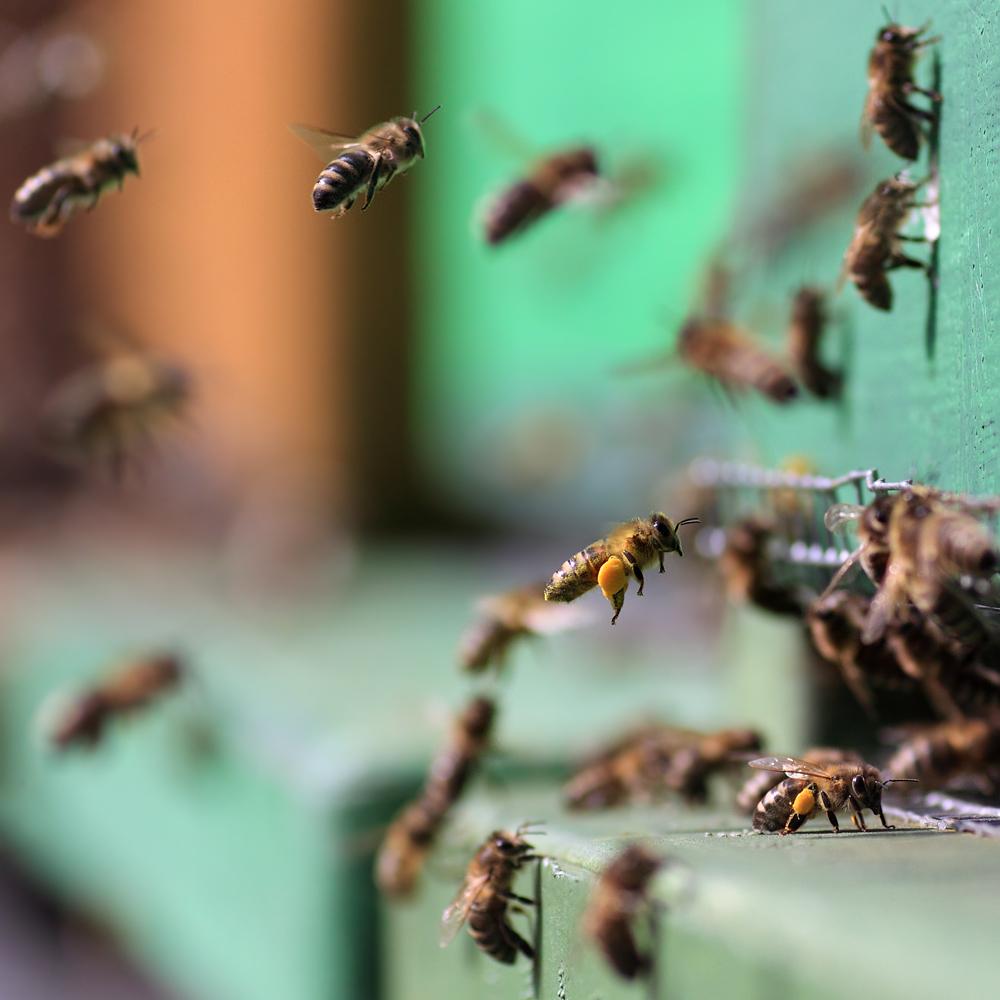 Bienenflugsaison 2012