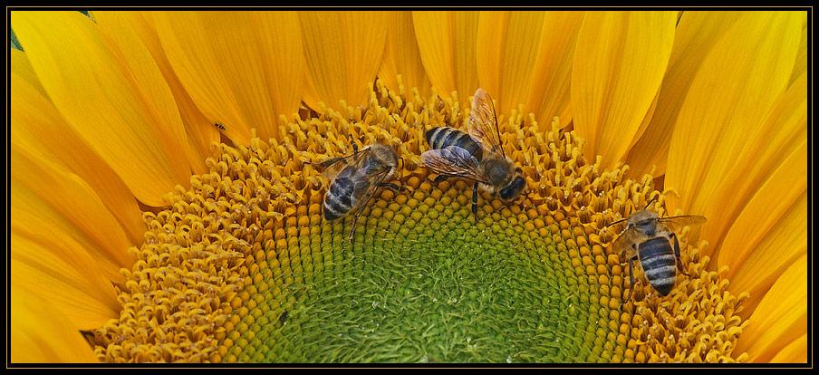 Bienenfreude