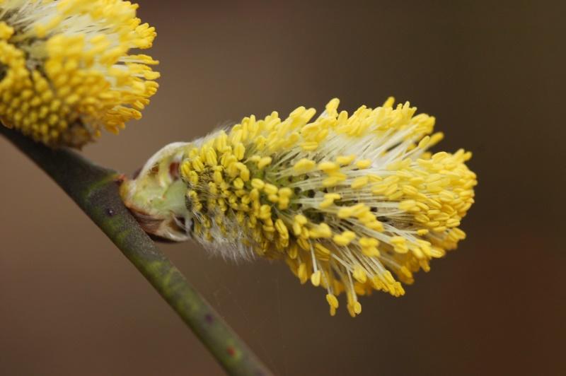 Bienenfutter