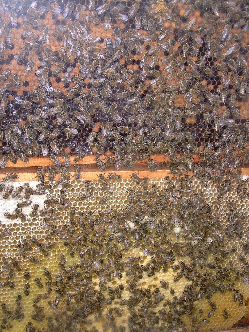 Bienengewusel