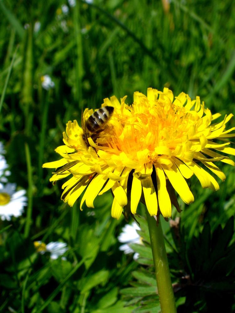 Bienenhonig :D