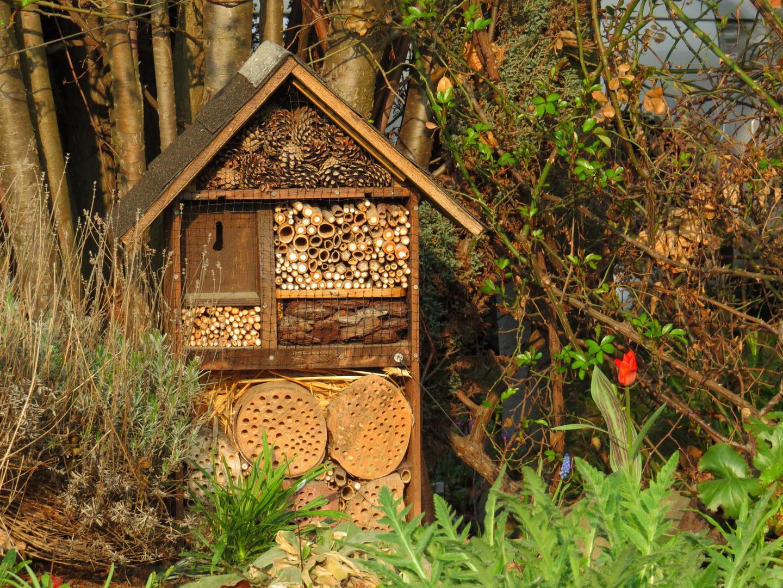 Bieneninternat - prima, gefällt mir ...