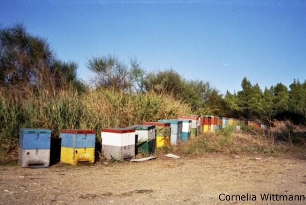 Bienenkästen Chalkidiki