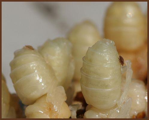 Bienenkiller (1)