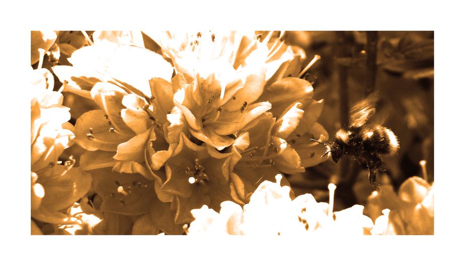 Bienenknipsbild