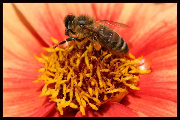 Bienenlady mit Honig-Täschchen